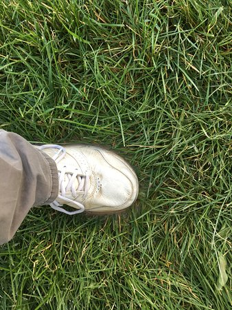 Filer, ID: Standing in muddy water that was tracked through my trailer