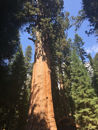 Sequoia National Park (Visalia) - 2019 All You Need to Know