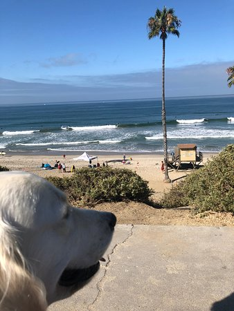 San Clemente Coastal Trail: Bentley checking out the waves