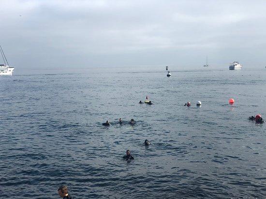 Signature Scuba Diving
