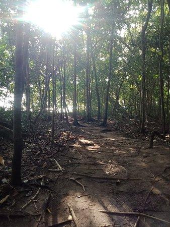 Zdjęcie Pulau Tiga