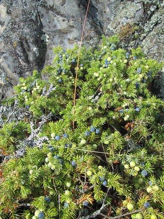 Aland Island, ฟินแลนด์: Luontopolku on monenkirjava
