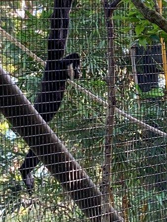 Valokuva: Sydney Taronga Zoo General Entry Ticket