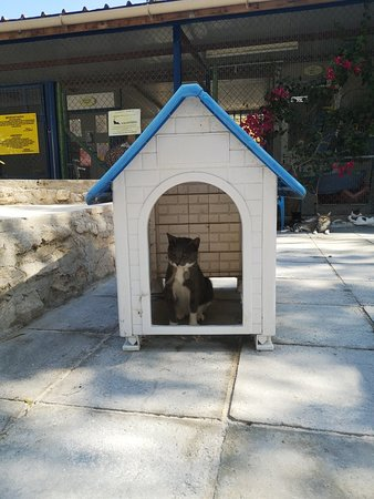 Foto de Malcolm Cat Sanctuary