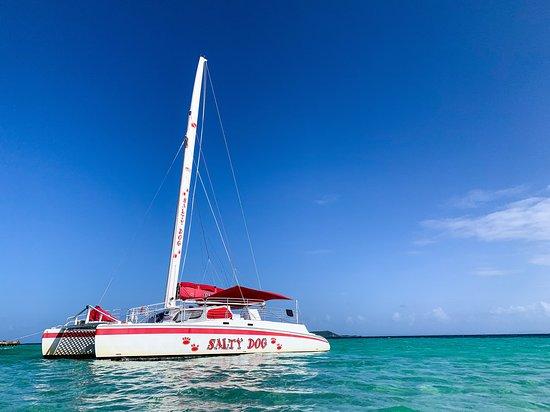 Salty Dog Catamaran