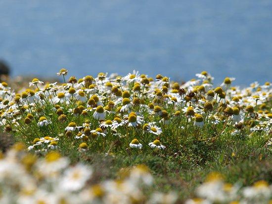Полуостров Гауэр, UK: Gower island, werkelijk prachtige plek om overheen te slenteren. Vol bloemen en allerlei soorten vogels. De beperkte toegang is geen overbodig iets, dit moet je willen beschermen voor massa toerisme.