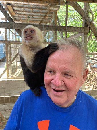 Daniel Johnson's Monkey and Sloth Hang Out (Roatan) - 2019