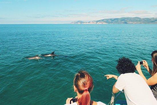 Dolphin Bay PT