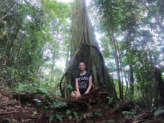 Putumayo Department, Kolumbia: La magia de la medicina ancestral con Colombia Adventure Trips