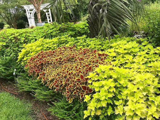 Bolivia, NC: Lovely Coleus beds full of color and patterns