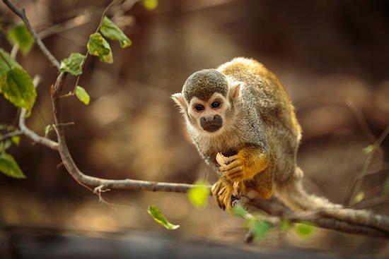 Bush Babies Monkey Sanctuary (Hartbeespoort) - 2019 All ...