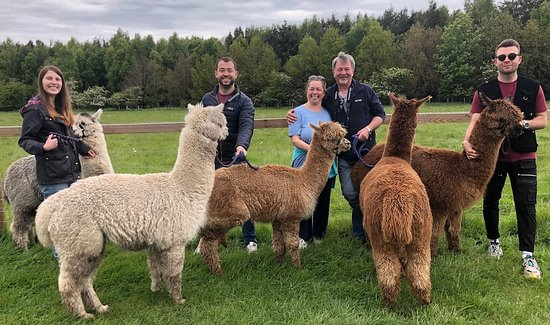 Heddon-on-the-Wall, UK: James and his family joined us on a walk n talk and loved it! https://barnacre-alpacas.co.uk/visit-barnacre/walk-and-talk