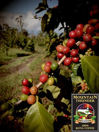 Come visit Mountain Thunder Coffee and learn everything that goes into making our coffee so delicious!  Free tours 7 days per week, every half hour, no reservations necessary.