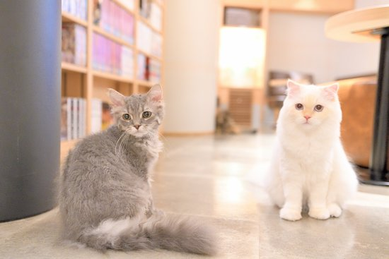 ‪Cat Cafe Mocha Lounge Shinjuku‬
