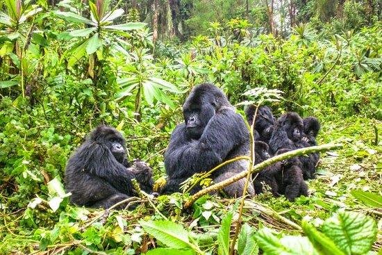 On Holiday Safaris