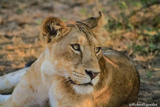 Wild Travel Safaris & Adventures