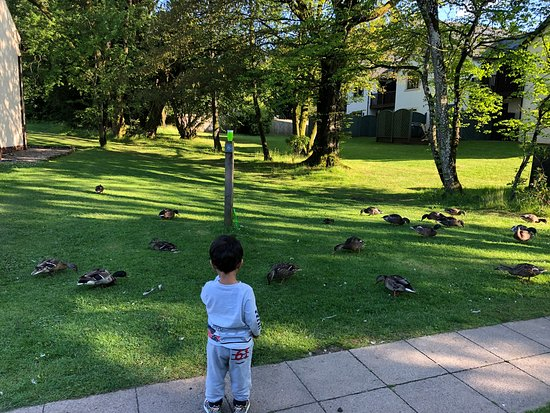 The Whitbarrow Hotel: Duck feeding every morning