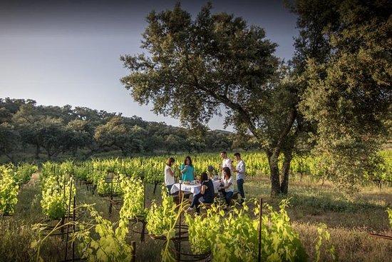 Ronda私人葡萄酒之旅和马贝拉小吃