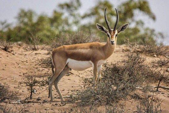 苏萨马萨国家公园(野生动物园)