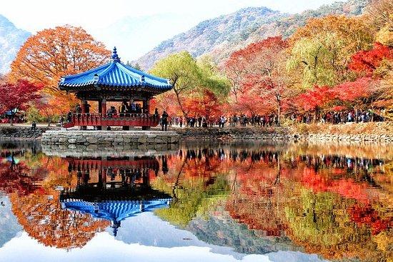 公吨。 Naejang秋叶和全州韩屋村1日游