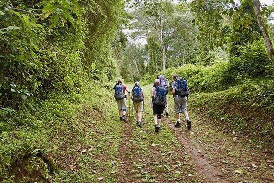 キリマンジャロマラングデイハイキング