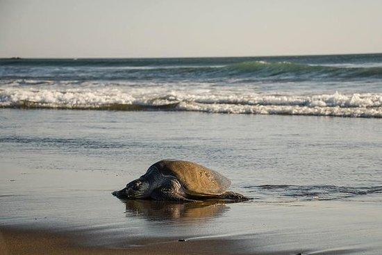 Tour de anidación de tortugas