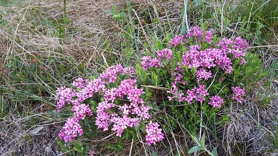Esino Lario, Italia: Flora alpina nel Parco delle Grigne