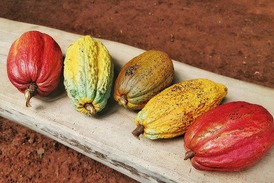 Sjokoladetur Manuel Antonio