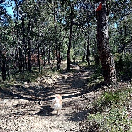 Jorgensen Park Walk Trail