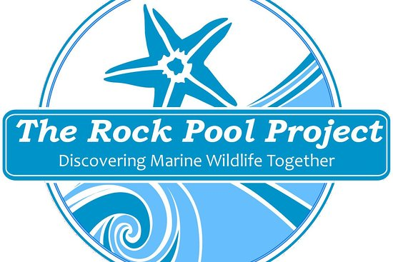 ‪The Rock Pool Project‬