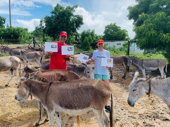 Saint Paul Parish, แอนติกา: We adopted four donkeys but left the staff with carrots and corn on the cob for the whole herd to enjoy!