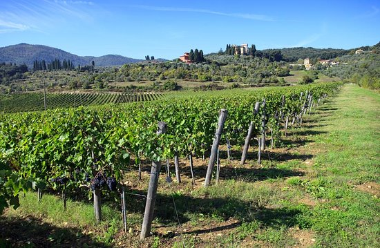 San Donato in Collina, Italien: vineyard