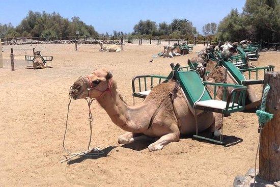 Utforsk Maspalomas 4 timer: Camel...