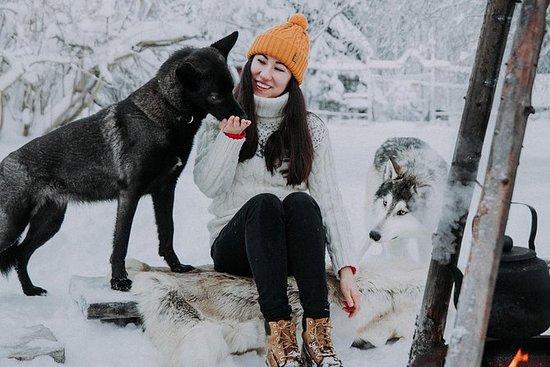 认识塔瓦斯和狼狗