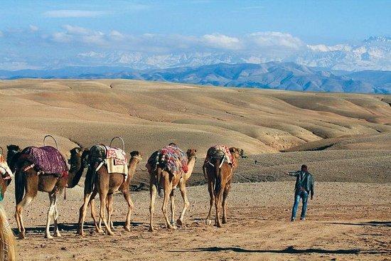 Desert Agafay og Atlas Mountains...
