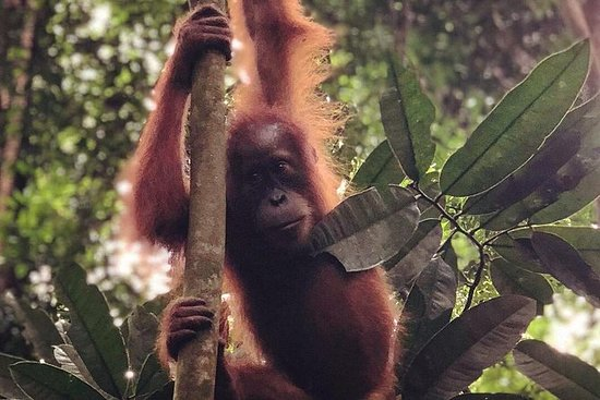 Full Day Jungle Trek - Bukit...