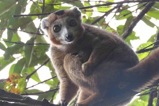 マダガスカルの最高の部分のユニークな発見