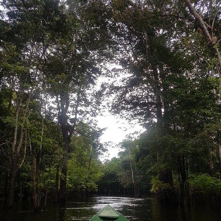 Amazon Jungle Brasil