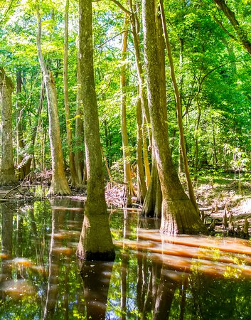 Hopkins, SC: Dreaming of canoeing through a cypress swamp forest? Congaree National Park in South Carolina has a marked canoe trail on Cedar Creek. Bring your own canoe or rent one in nearby Columbia. Only have one car? Put in at Cedar Creek Landing then explore either upstream or downstream to Dawson's Lake. It's calm waters here so you can easily head back to where you came. www.nps.gov/cong/