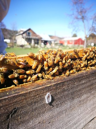 Garston, New Zealand: Spring has sprung and our bees are out and busy!