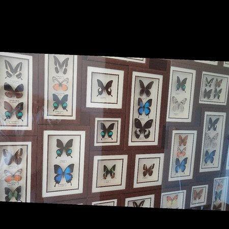 Sukapura, Индонезия: Butterfly....