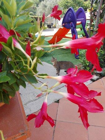 Magazzini, Itália: Piscina