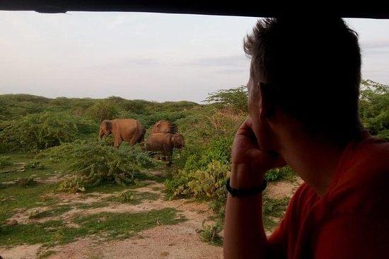 Safari compartido por la mañana en el...