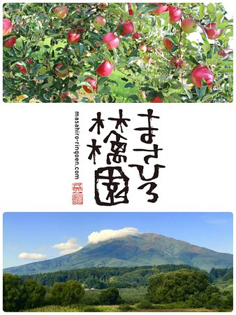 Masahiro Ringo Orchard