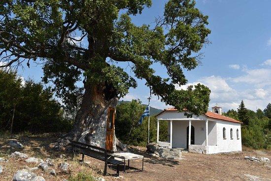 Tree Chapel Saint Paissiou
