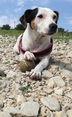 Colle di Tora, Italy: Lei è Fragola che domina la sua pallina da tennis.