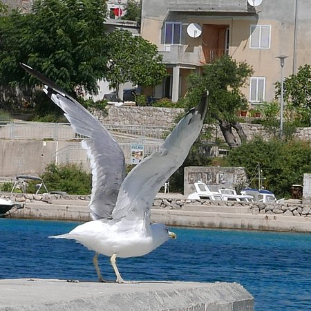 Jakisnica, Croatia: Jakišnica harbour.