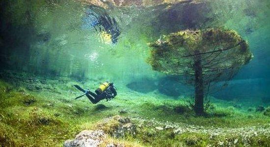 Oberort, Αυστρία: Alberi sommersi