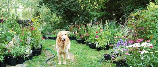 Morning Star Perennials & Nursery