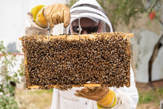 Beekeeping Class Newcastle - Hands On